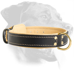 Stylish Rottweiler Leather Collar with special padding