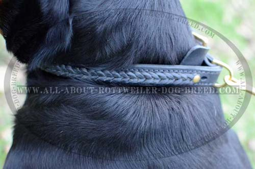 Stylish Hand Made Braid on Leather Dog Collar