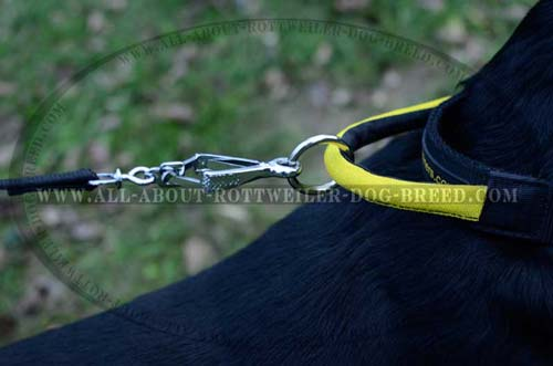 Ring on Handle of Nylon Dog Collar for Lead Attachment
