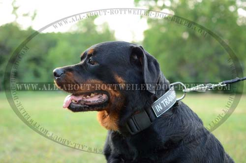 best dog training collars