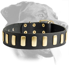 Gorgeous Rottweiler Leather Collar with decoration
