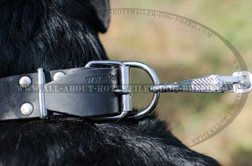 Rottweiler Leather Collar with Rustproof Fittings