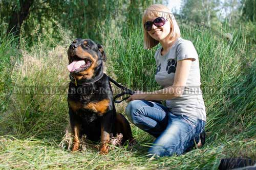 Astonishing Rottweiler Dog Padded Leather Collar