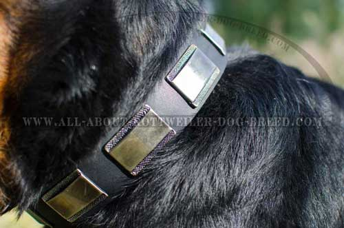 Astonishing Rottweiler Breed Leather Collar