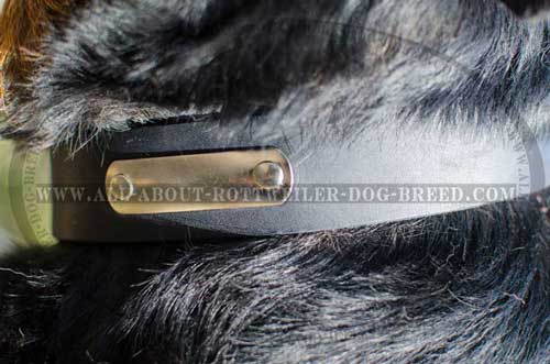 Everyday Rottweiler Dog Leather Collar with ID tag