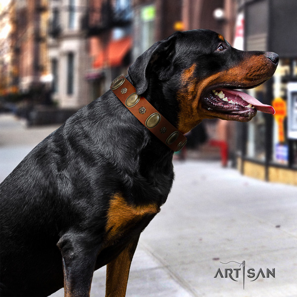 Rottweiler daily use full grain genuine leather collar for your handsome canine