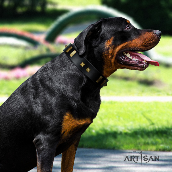 Rottweiler daily walking genuine leather collar for your stylish canine