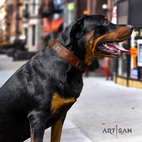 Rottweiler adjustable collar with stunning embellishments for your pet