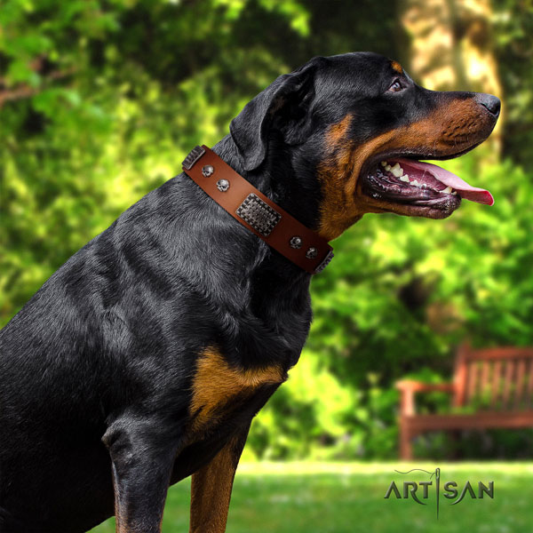 Rottweiler easy adjustable full grain natural leather dog collar with remarkable studs