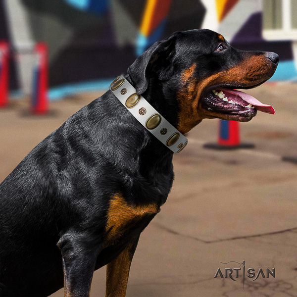 Rottweiler everyday use leather collar for your impressive dog
