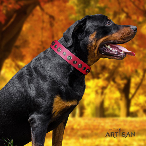 Rottweiler handmade collar with incredible adornments for your four-legged friend