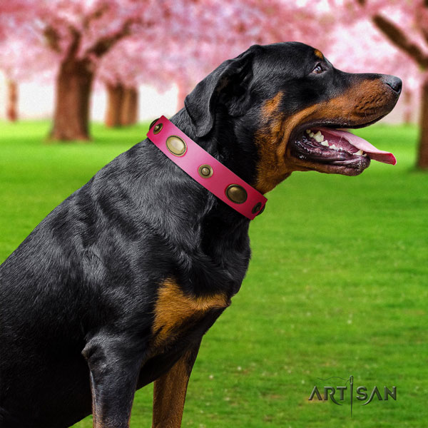 Rottweiler perfect fit natural genuine leather dog collar with incredible adornments