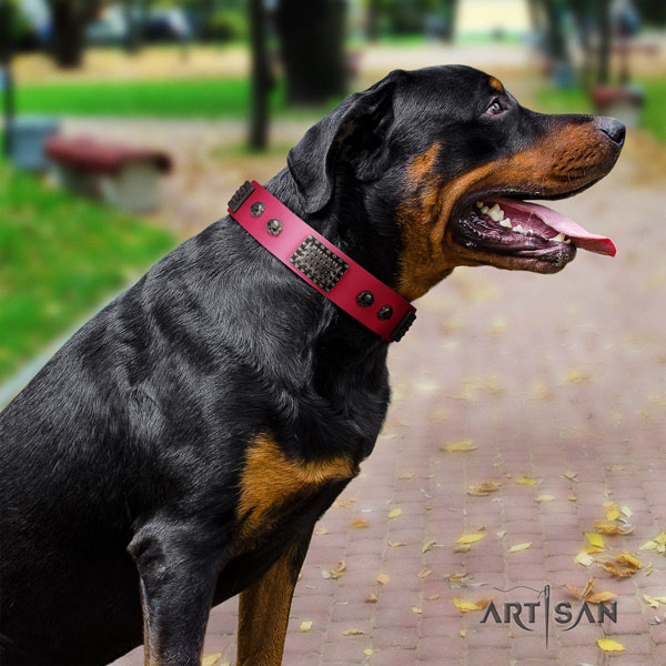 Rottweiler fine quality full grain leather dog collar with stunning embellishments