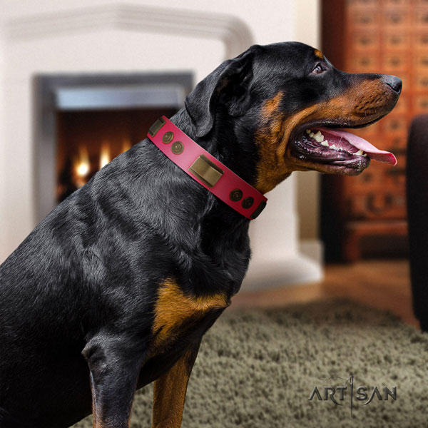 Rottweiler adjustable leather dog collar with amazing adornments