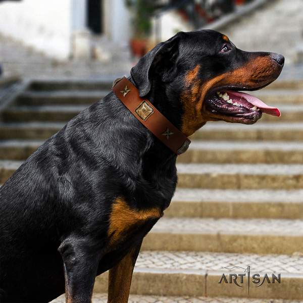Rottweiler stylish walking full grain genuine leather collar for your stylish dog