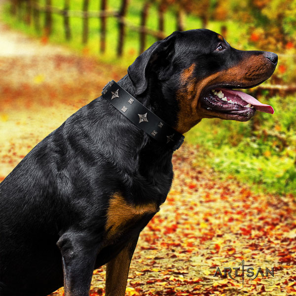Rottweiler daily walking full grain leather collar for your handsome canine