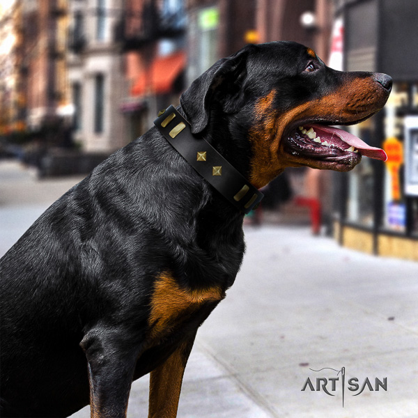 Rottweiler walking full grain leather collar for your attractive pet