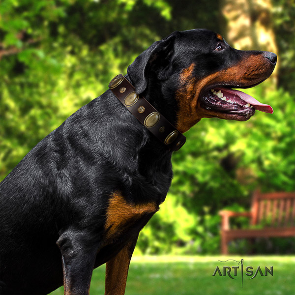 Rottweiler walking leather collar for your impressive dog