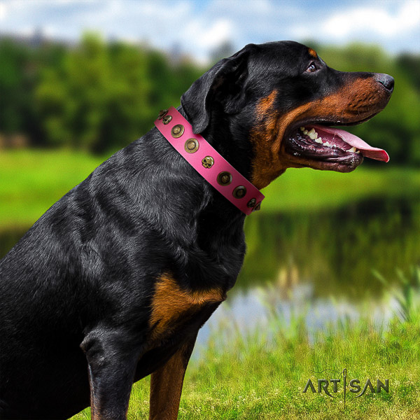 Rottweiler daily walking leather collar for your attractive doggie