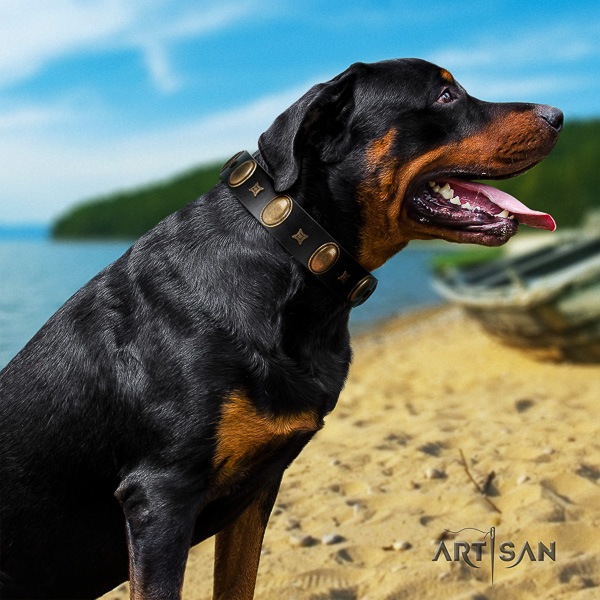 Rottweiler comfortable wearing genuine leather collar for your handsome four-legged friend