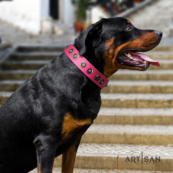 Rottweiler fancy walking full grain leather collar for your handsome canine