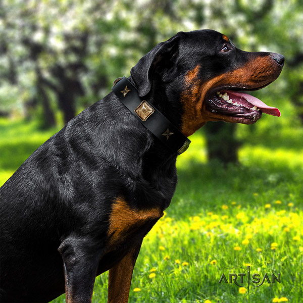 Rottweiler everyday walking full grain genuine leather collar for your handsome canine