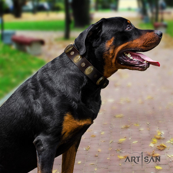 Rottweiler handy use genuine leather collar for your impressive dog