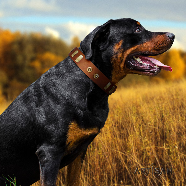 Rottweiler basic training genuine leather collar for your impressive doggie