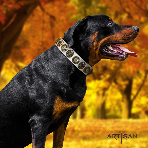 Rottweiler handy use full grain genuine leather collar for your lovely doggie