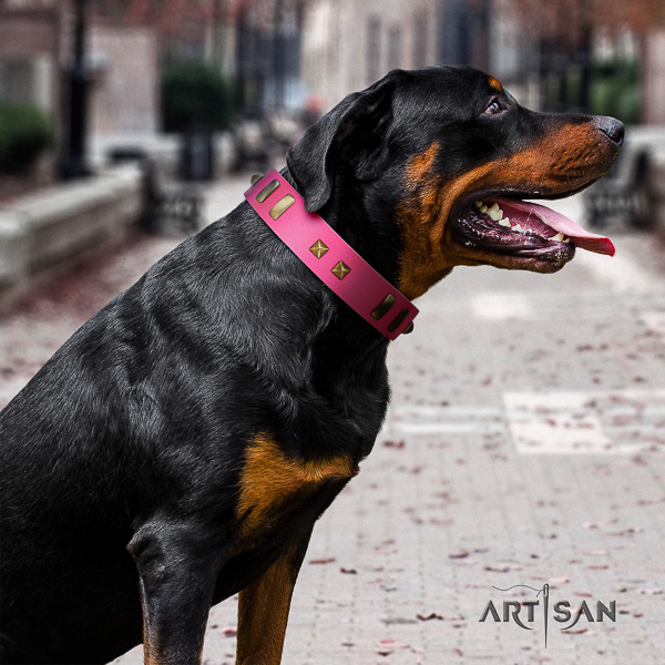 Rottweiler everyday walking natural leather collar for your impressive doggie