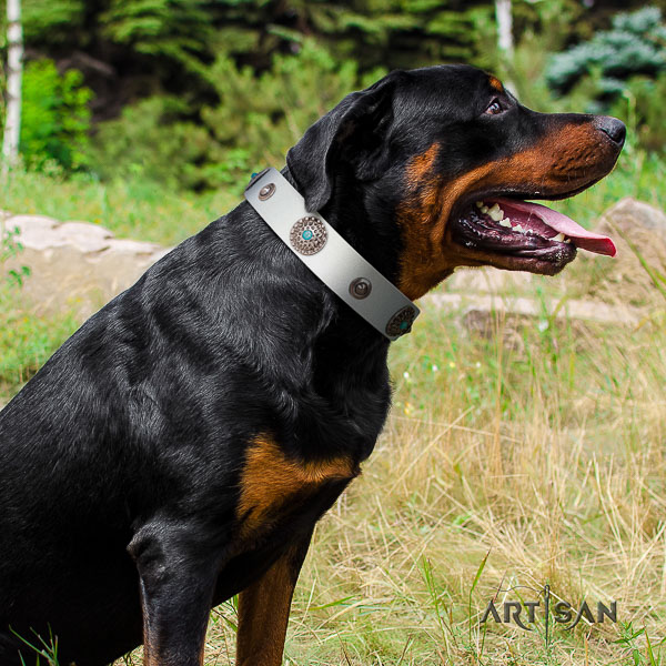 Rottweiler everyday use genuine leather collar for your lovely dog