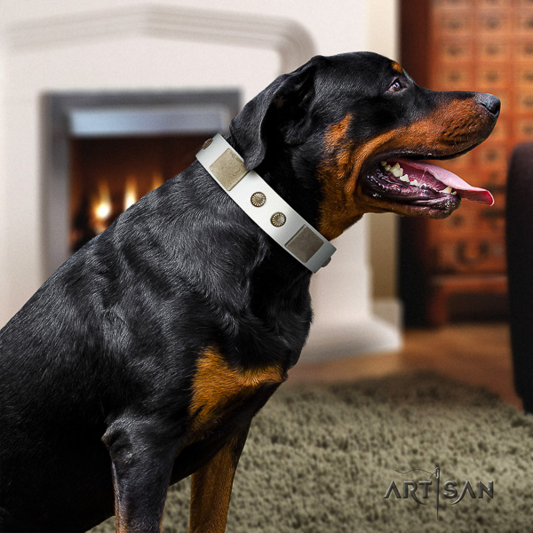 Rottweiler comfortable wearing full grain natural leather collar for your beautiful doggie