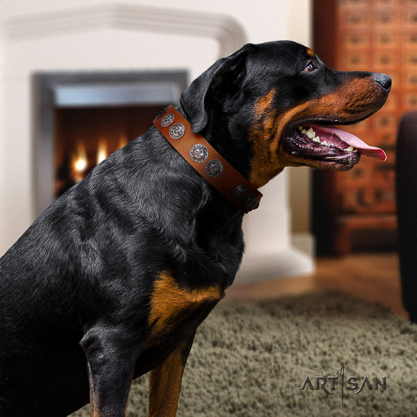 Rottweiler fancy walking full grain natural leather collar for your lovely canine