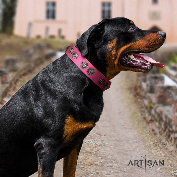 Rottweiler daily walking leather collar for your handsome canine