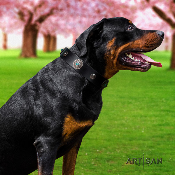 Rottweiler walking full grain natural leather collar for your handsome doggie