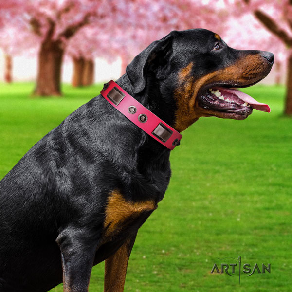 Rottweiler convenient collar with amazing adornments for your pet