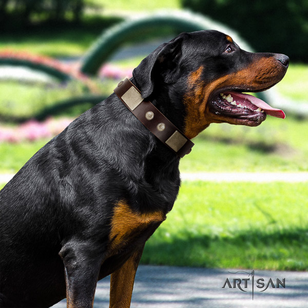 Rottweiler daily use genuine leather collar for your impressive four-legged friend