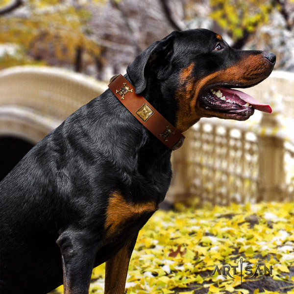 Rottweiler everyday use full grain leather collar for your handsome pet