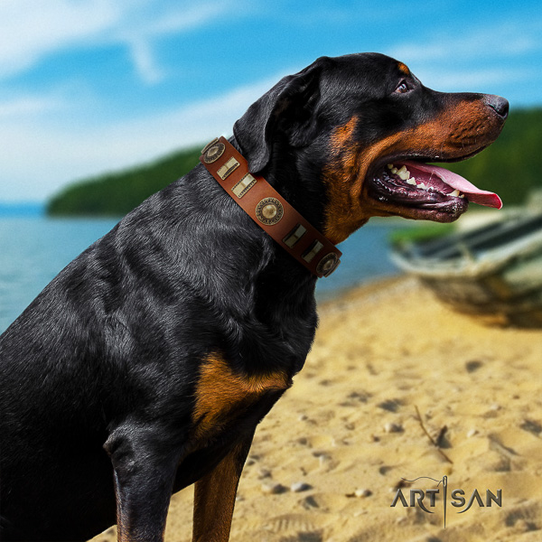 Rottweiler handy use full grain natural leather collar for your stylish canine