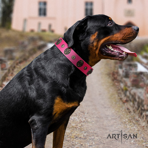 Rottweiler daily walking genuine leather collar for your impressive doggie