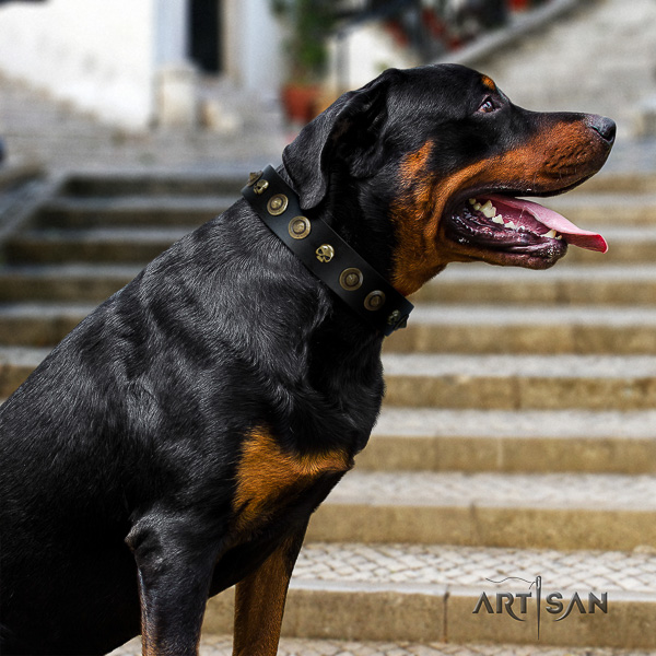 Rottweiler everyday walking leather collar for your impressive four-legged friend