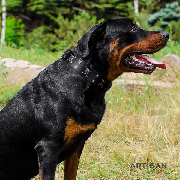 Rottweiler everyday use full grain genuine leather collar for your stylish canine