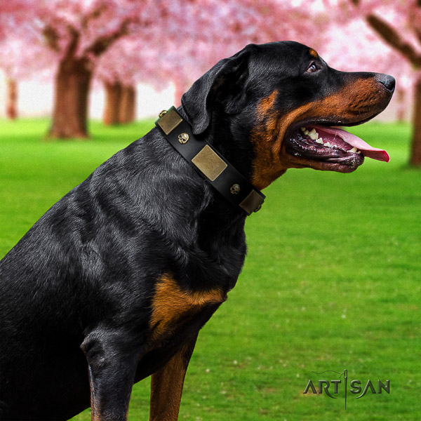 Rottweiler daily use full grain leather collar for your beautiful four-legged friend