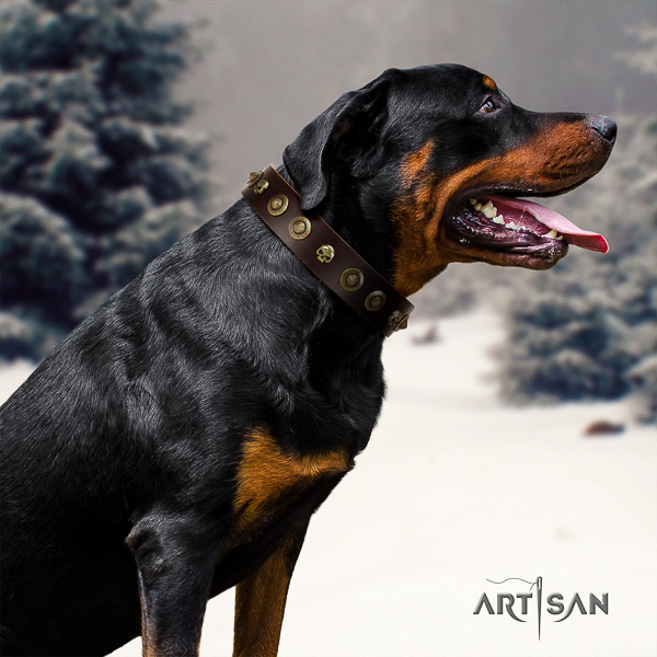 Rottweiler everyday walking full grain genuine leather collar for your beautiful pet