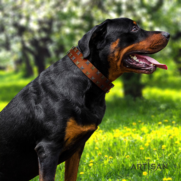 Rottweiler stylish walking full grain natural leather collar for your impressive canine