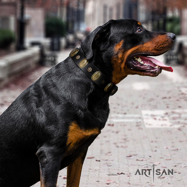 Rottweiler fancy walking genuine leather collar for your handsome canine