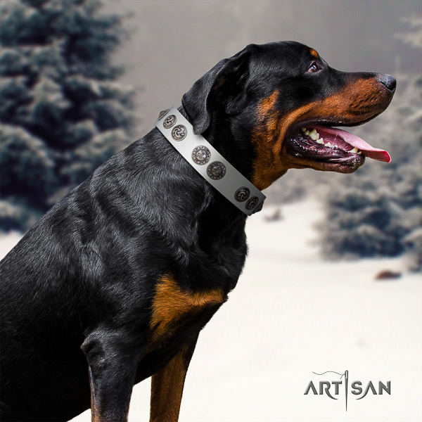 Rottweiler everyday use full grain genuine leather collar for your handsome doggie