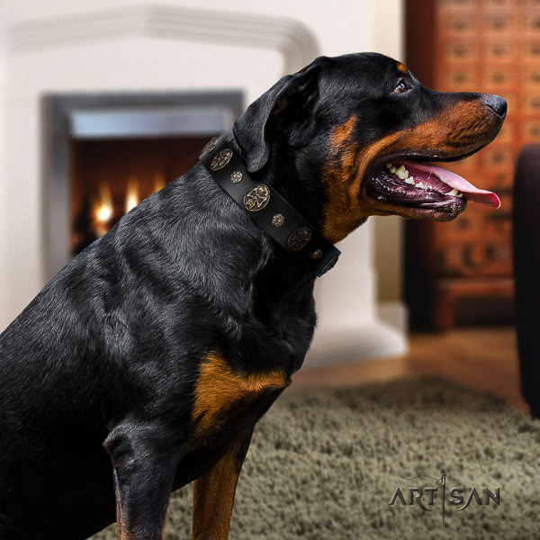 Rottweiler handy use genuine leather collar for your impressive canine