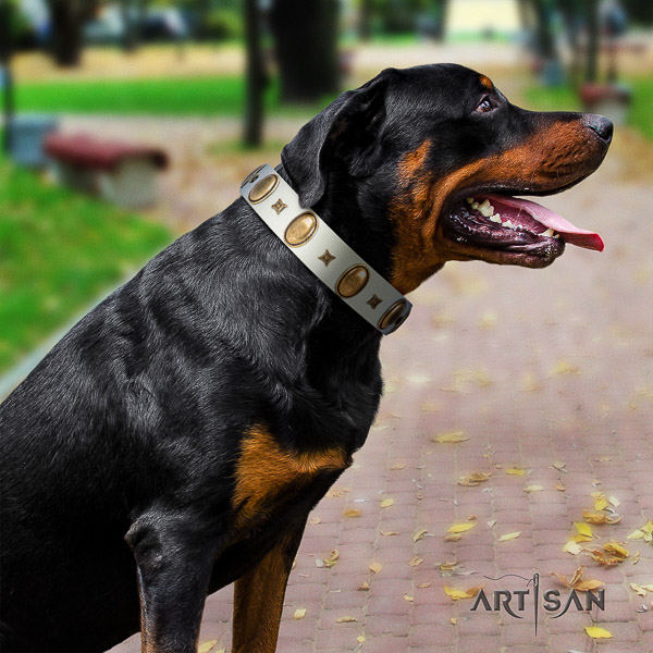 Rottweiler easy wearing full grain natural leather collar for your impressive four-legged friend