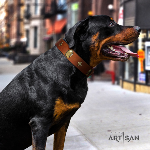 Rottweiler comfortable wearing full grain genuine leather collar for your beautiful four-legged friend